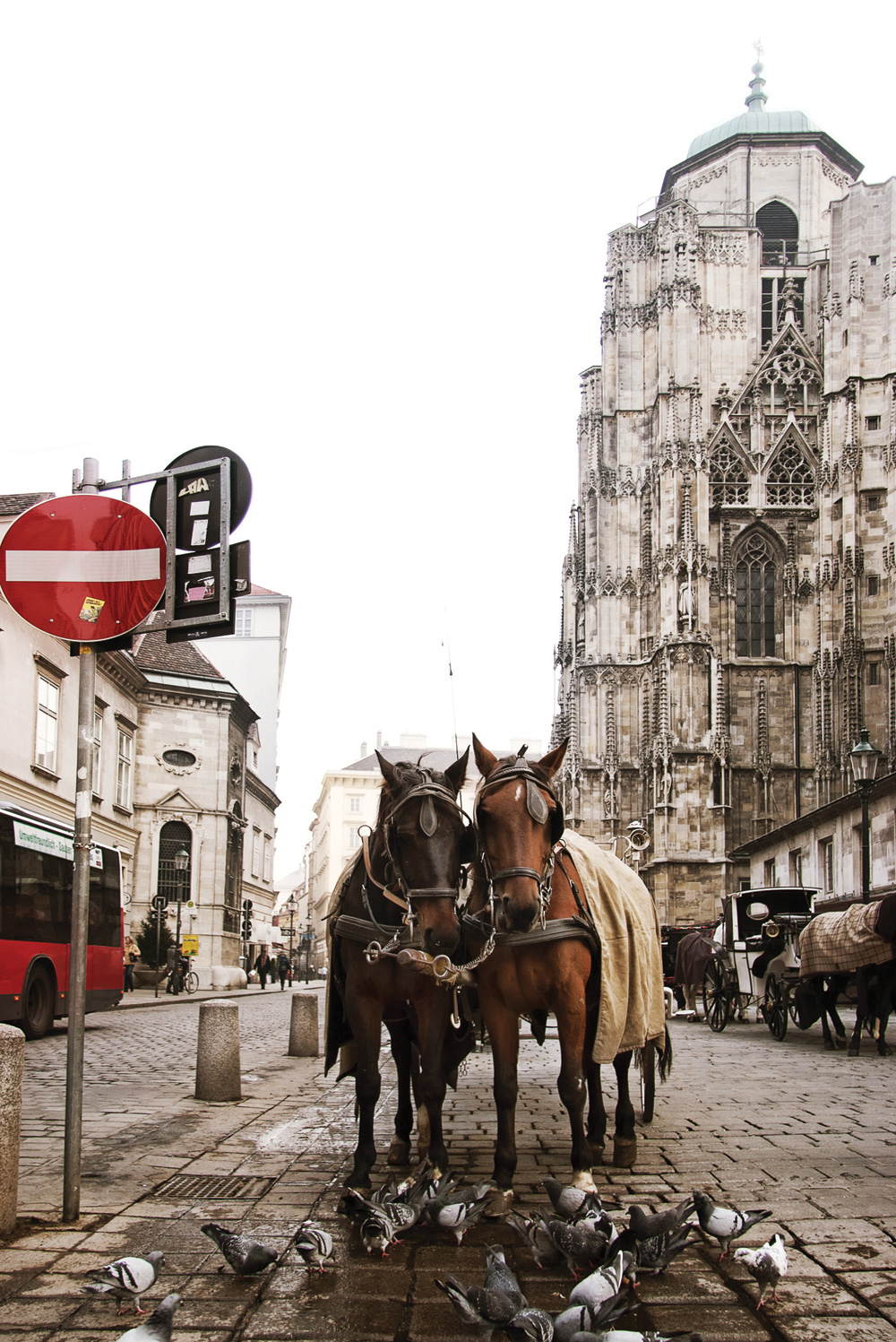 Two horses in the Stephansplatz, square at the geographical centre of Vienna