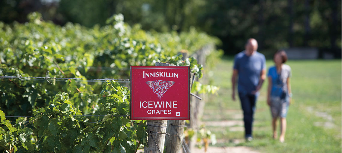 Inniskillin, one of the oldest vineyards in Canada