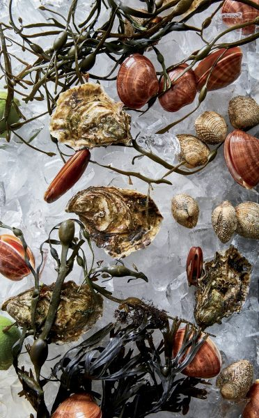 Oysters_Clams_on_Ice_cred_Tim_Atkins (Custom)